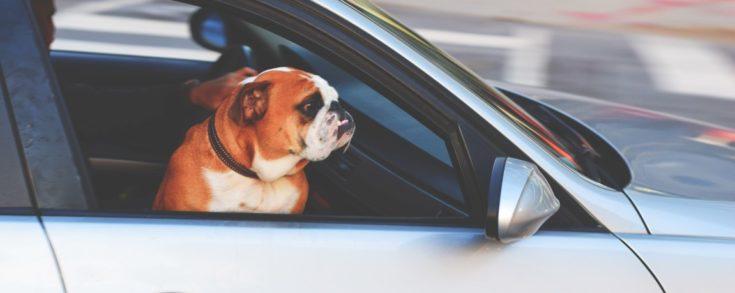 7 de cada 10 conductors porten bosses de mà al cotxe mentre condueixen